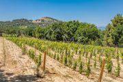 Close to Aix-en-Provence - Provencal farm house with vineyard - photo9