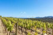 Mougins - Unique vignoble à 15 mn des plages de Cannes - photo5