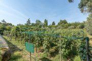 Рядом с Каннами - Провансальская бастида с роскошным садом - photo2