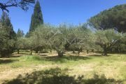 Saint-Rémy de Provence - Villa with pool and views - photo8