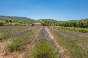 Close to Aix-en-Provence - Provencal farm house with vineyard - photo10