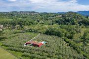 Недалеко от Канн - Для любителей оливковых рощ. - photo10