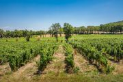 Close to Aix-en-Provence - Provencal farm house with vineyard - photo9